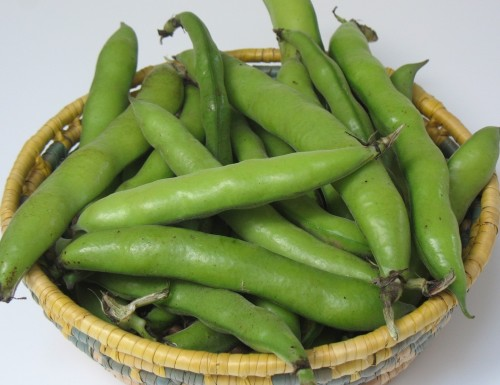 favas in basket