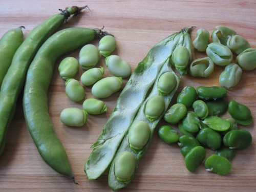 favas raw and cooked